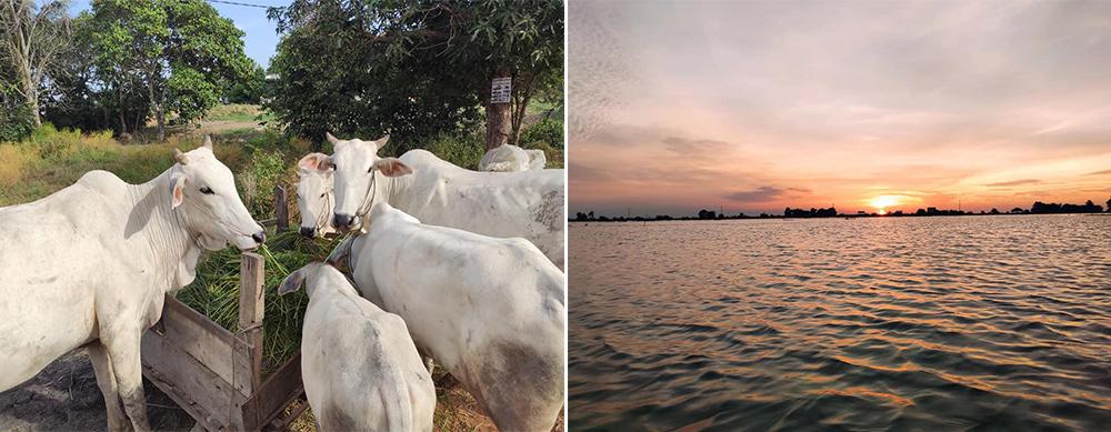 ジャパンハート カンボジアポーサット州洪水被災地緊急医療支援活動
